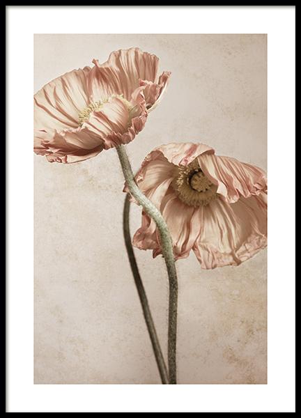 Blushing Poppies No2 Poster