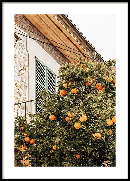 Oranges In Garden Poster