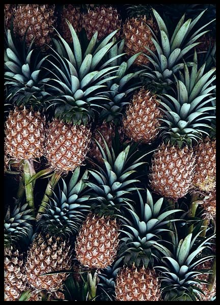Pineapple Fruits Poster