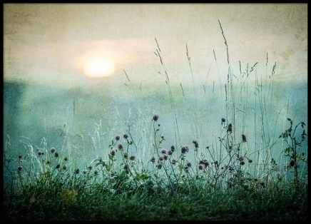 Meadow in Dawn Poster i gruppen Posters  / Storlekar / 50x70cm hos Desenio AB (2327)