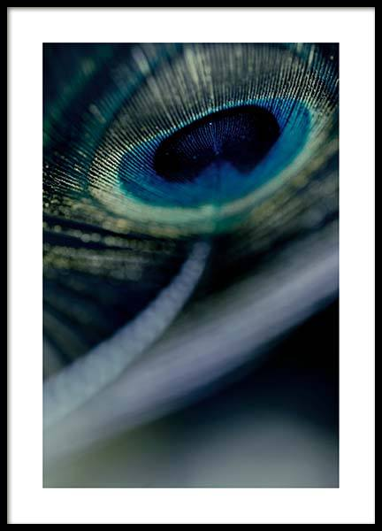 Peacock Feather Close Up Poster i gruppen Posters  / Fotokonst hos Desenio AB (2860)