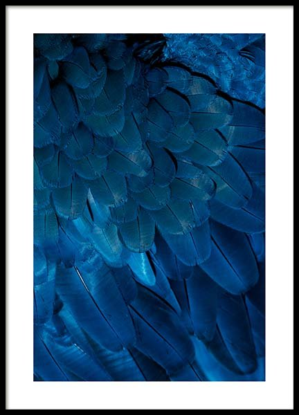 Deep Blue Feathers Poster