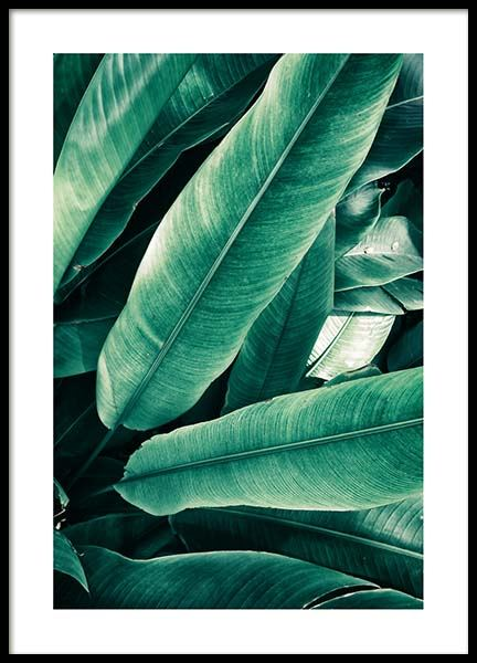 Banana Leaves Close Up Poster i gruppen Posters  / Botaniska hos Desenio AB (3549)