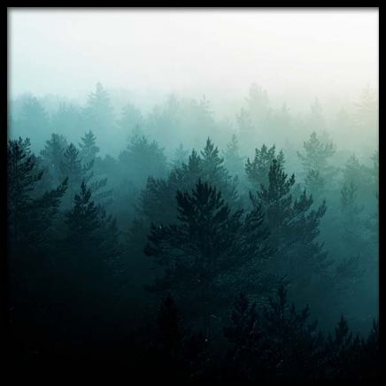 View Of Misty Forest Poster i gruppen Posters  / Storlekar / 50x50cm hos Desenio AB (3567)