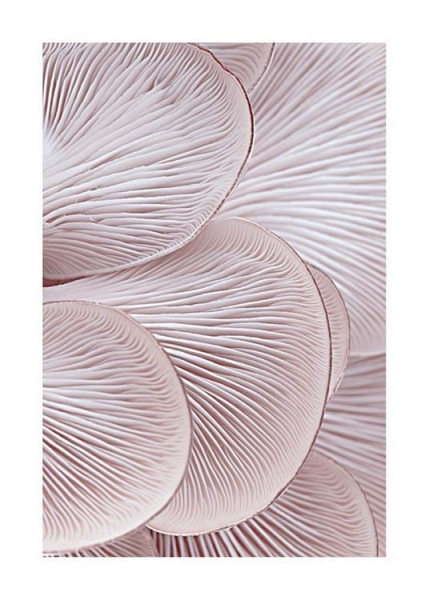 Pink Oyster Pattern One Poster i gruppen Posters  / Fotokonst hos Desenio AB (3652)