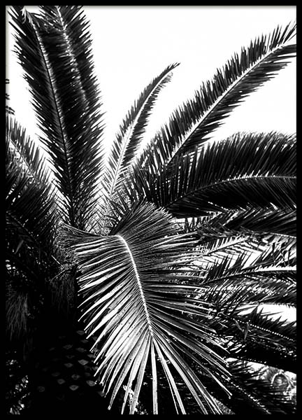 Palm Tree Crown Poster