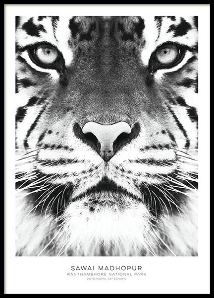 tavla med tiger svartvita posters snygga affischer och. Black Bedroom Furniture Sets. Home Design Ideas