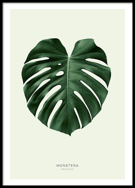 Green Monstera Poster