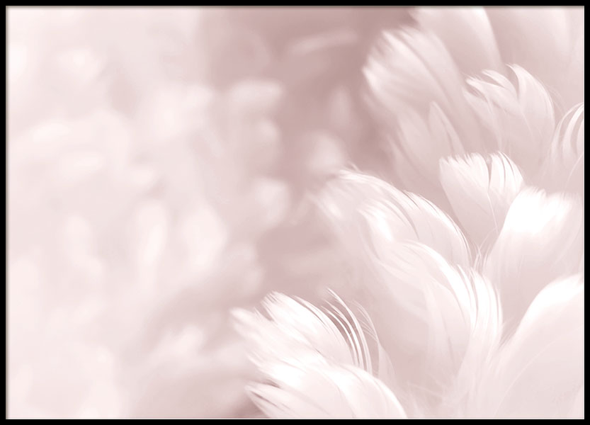 Fluffy Pink Feathers Poster i gruppen Posters  / Fotokonst hos Desenio AB (8512)