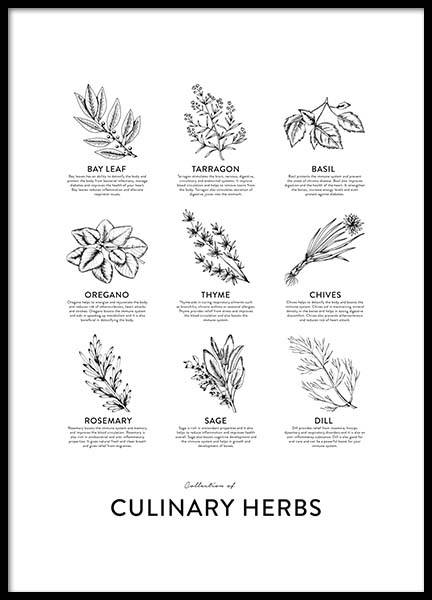 Collection Of Herbs Poster i gruppen Posters / Kökstavlor hos Desenio AB (8595)