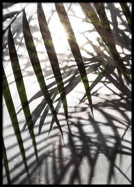 Palm Leaves Sunlight Poster