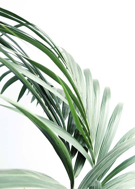 Palm Tree Leaves Close Up Poster / Fotokonst hos Desenio AB (10244)