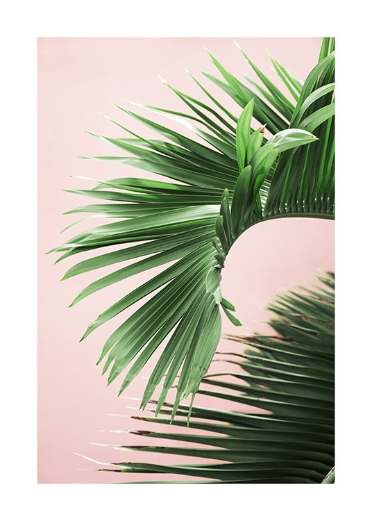 Pink and Green Palm No2 Poster / Fotokonst hos Desenio AB (10856)