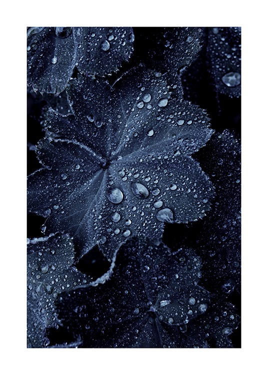Raindrops on Blue Leaves Poster / Fotokonst hos Desenio AB (11052)