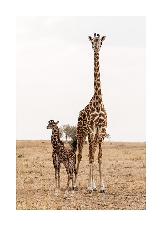 Mother and Baby Giraffe Poster / Fotokonst hos Desenio AB (12578)