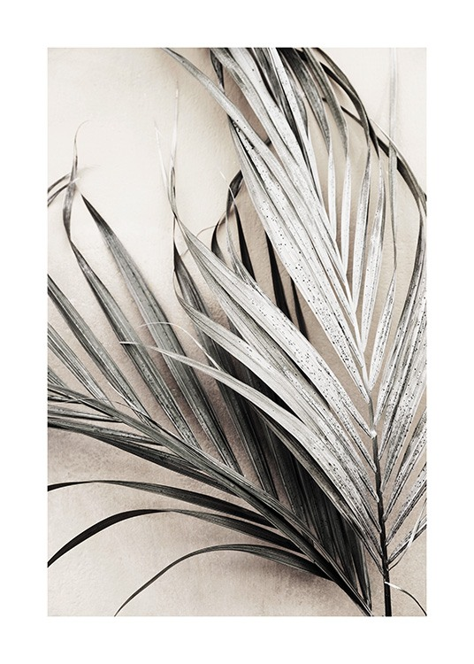 Dry Palm Leaves No3 Poster / Palmer hos Desenio AB (13672)