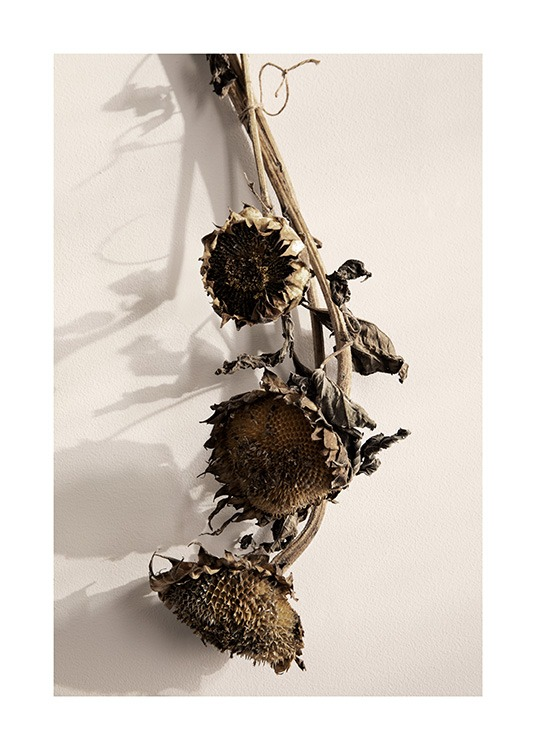 Dried Sunflowers No1 Poster / Blommor hos Desenio AB (13835)