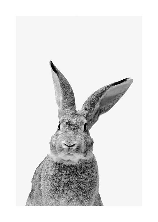 Black and White Rabbit Poster / Djur hos Desenio AB (13859)