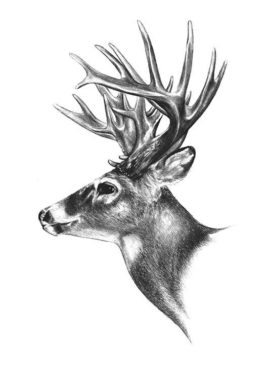 Deer Black And White Poster / Svartvita hos Desenio AB (8106)