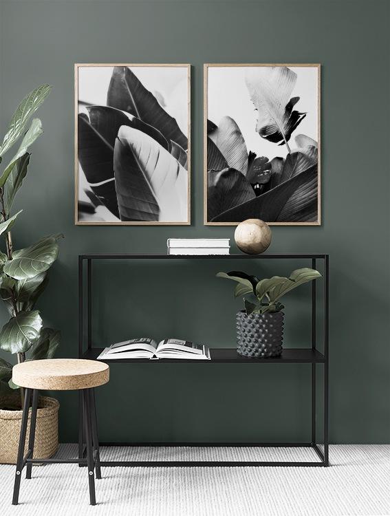 Botaniska tavlor med bananblad i svartvitt
