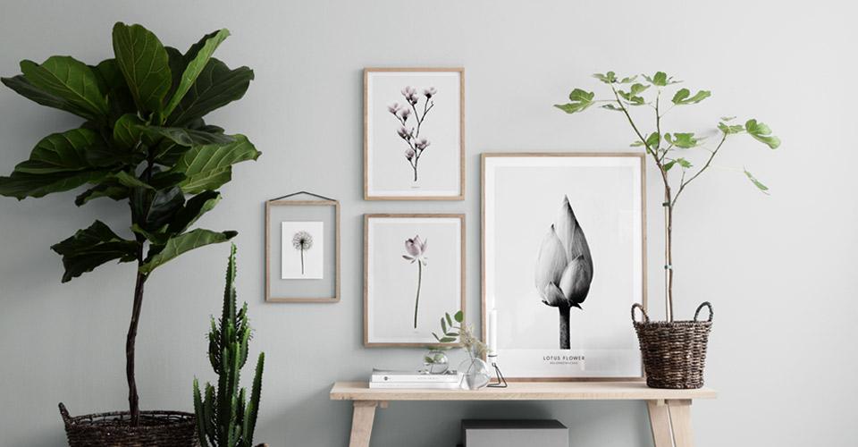 Botanische Poster | Poster mit Blumen und Pflanzen | Desenio